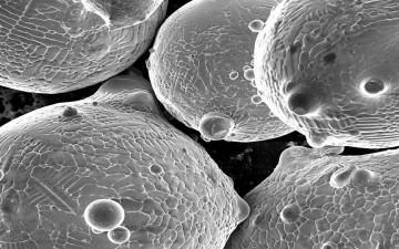 partiklar av metallpulver i mikroskop