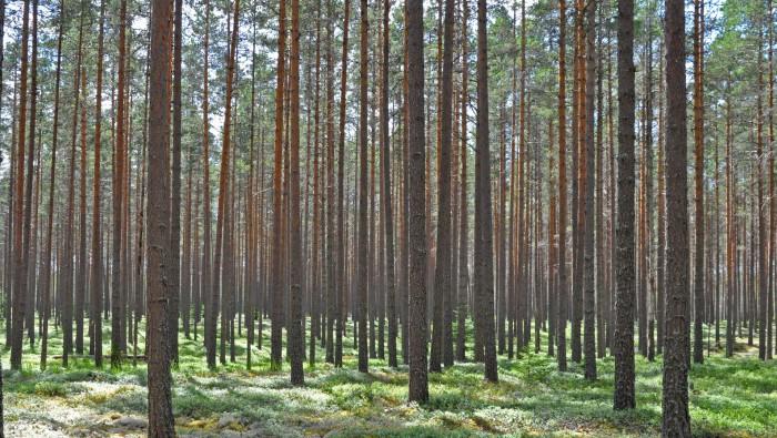 Biomassa från skog är koldioxidneutralt